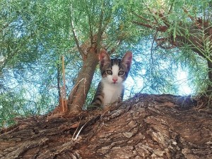 caravan and camping with your cat or pet