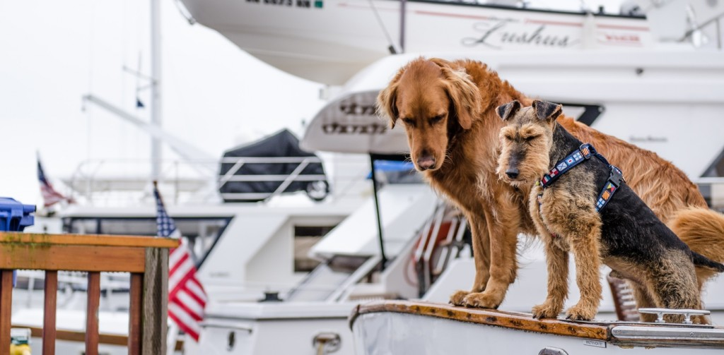 sailing dogs boat